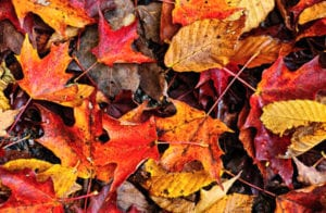 Autumn and Infertility: A Match for the Ages
